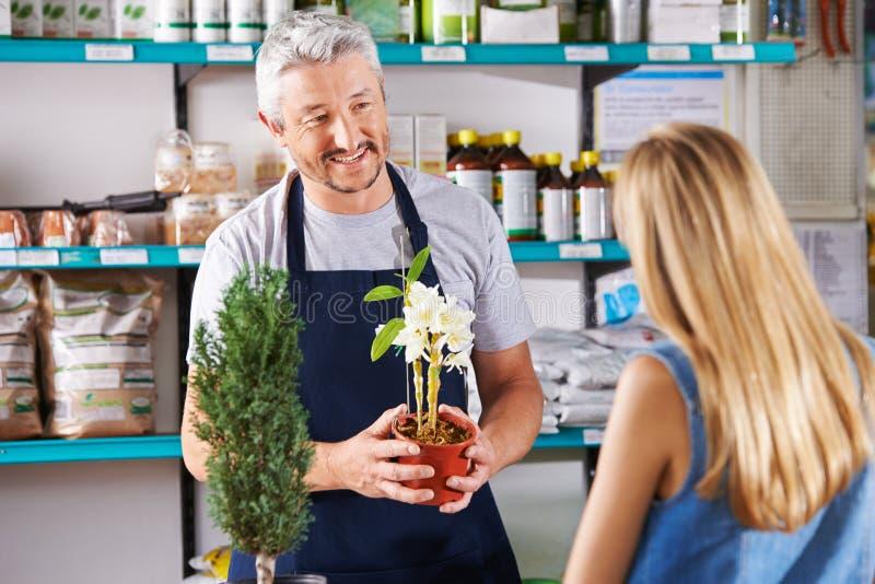 Man in nursery sells flowers stock image