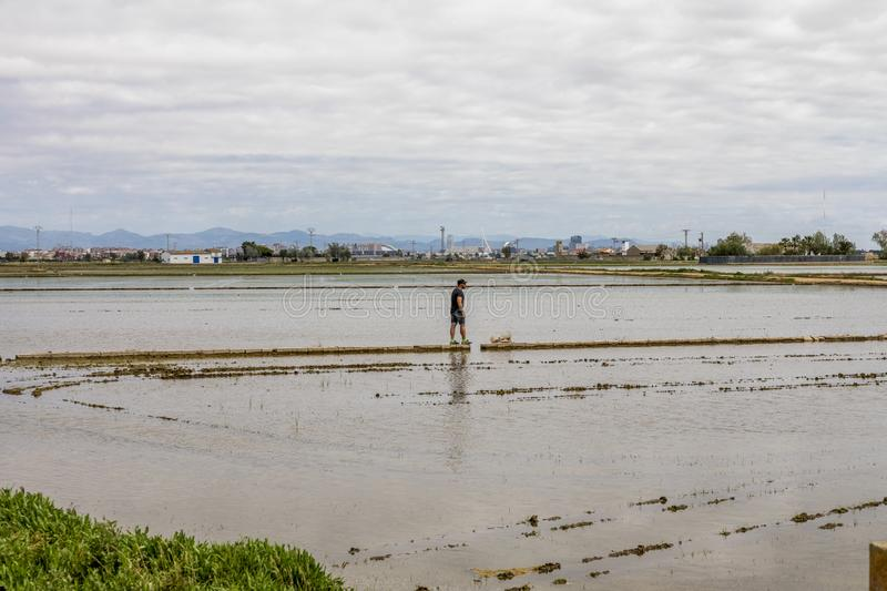 Man observing the rice fields near Valencia. The lagoon of Valencia is always a place visited by many tourists, for its variety of ornithorhin and for its royalty free stock images