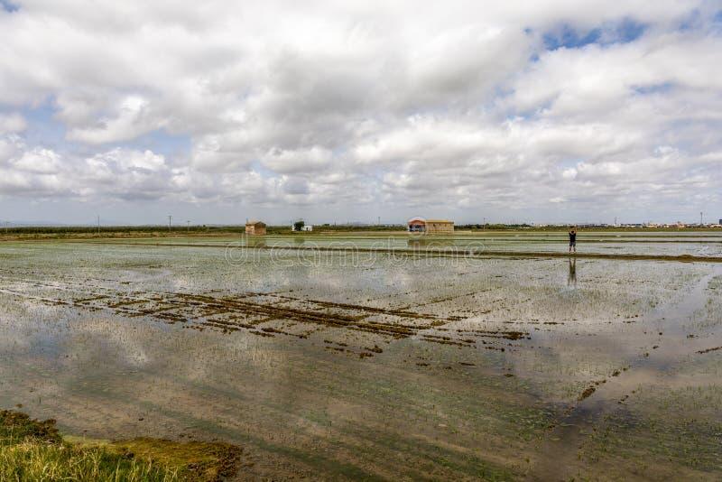 Man observing the rice fields near Valencia stock photo
