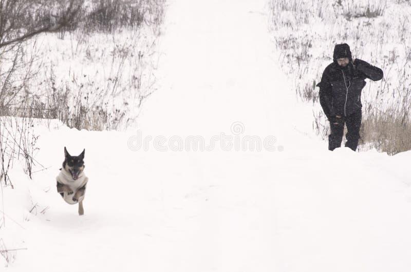 Man och en hund arkivbilder