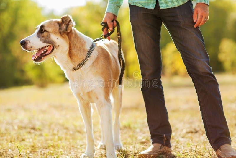 Man och hund fotografering för bildbyråer