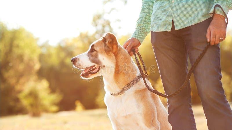 Man och hund royaltyfria bilder