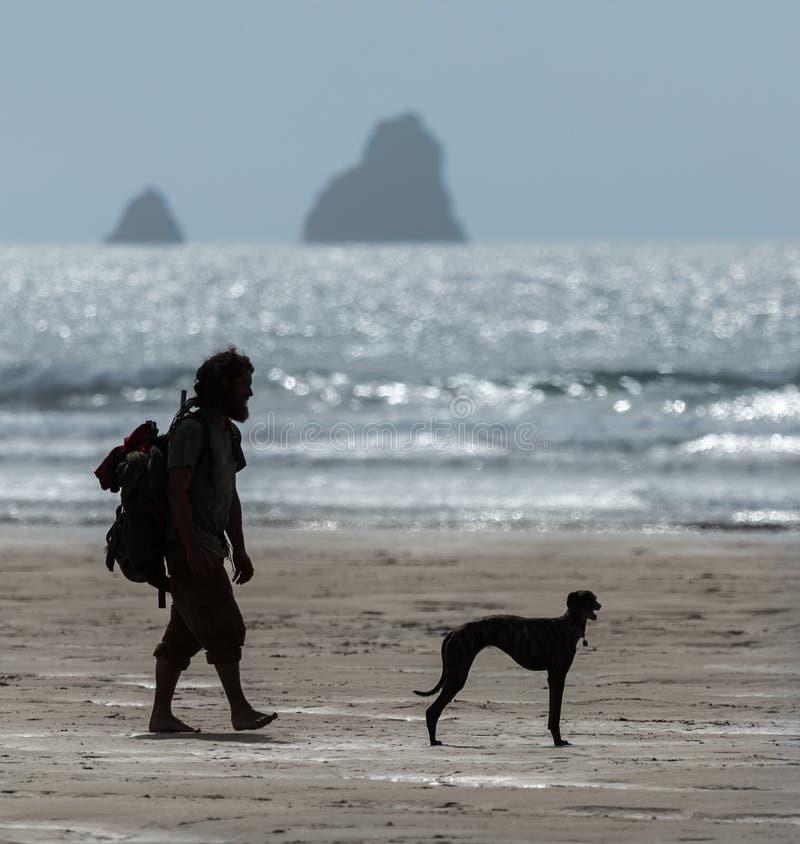 Man och hund som går på stranden i Cornwall royaltyfri foto
