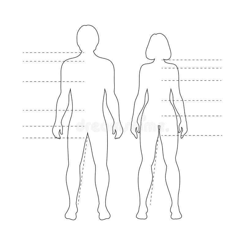 Man- och kvinnamänniskokroppkonturer med pekare Vektor isolerade infographic diagram för översikt stock illustrationer