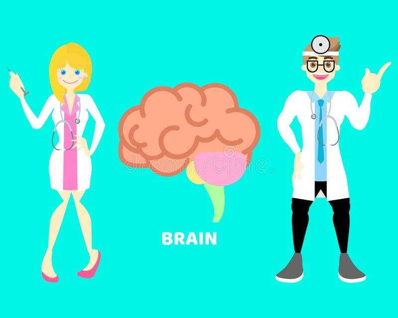 Man och kvinnlig doktor med hjärnan, för anatomikroppsdel för inre organ nervsystem stock illustrationer