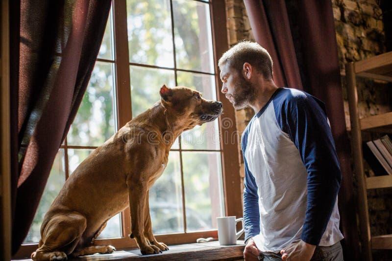 Man och staffordshire terrier som ser de royaltyfri fotografi