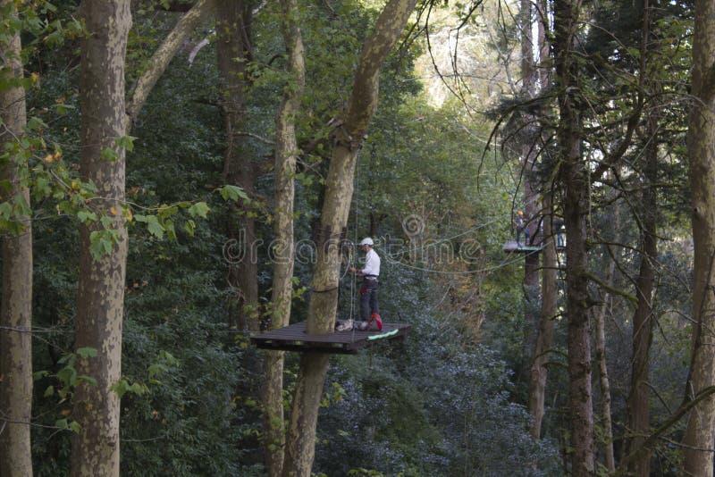 Man på en högstämd plattform på arbete som gör ren ett högväxt träd arkivbilder