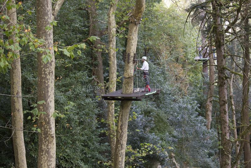 Man på en högstämd plattform på arbete som gör ren ett högväxt träd royaltyfri bild