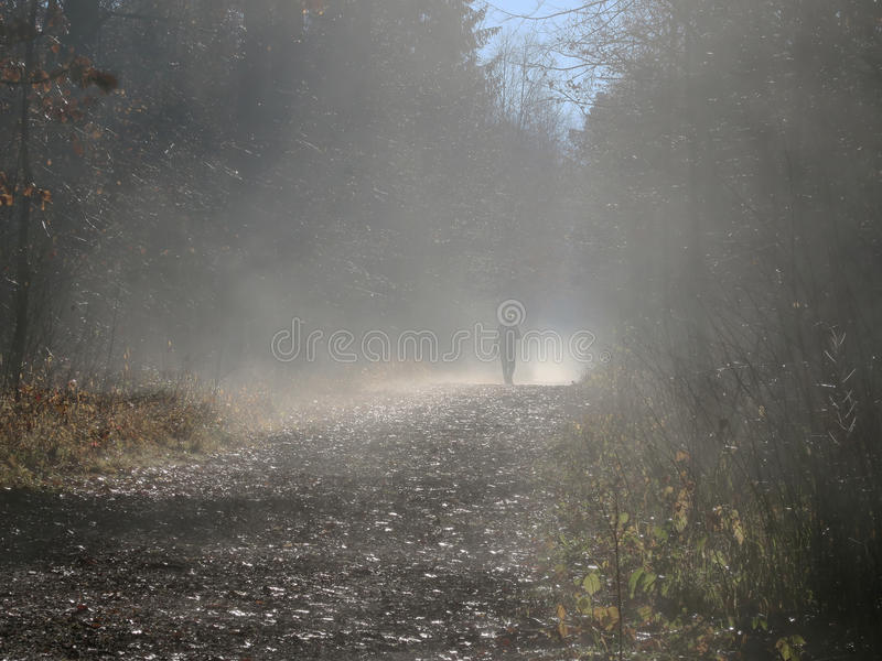 Man on path in foggy forest stock photography