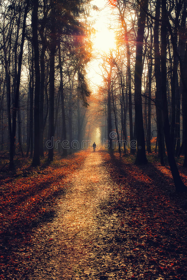 Man on a path in a moody forest stock image