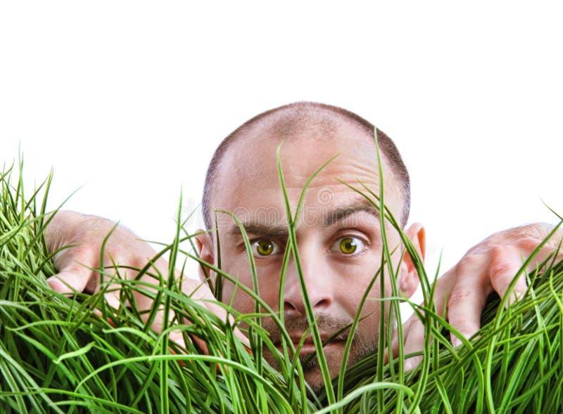 Man peering through tall grass royalty free stock photo