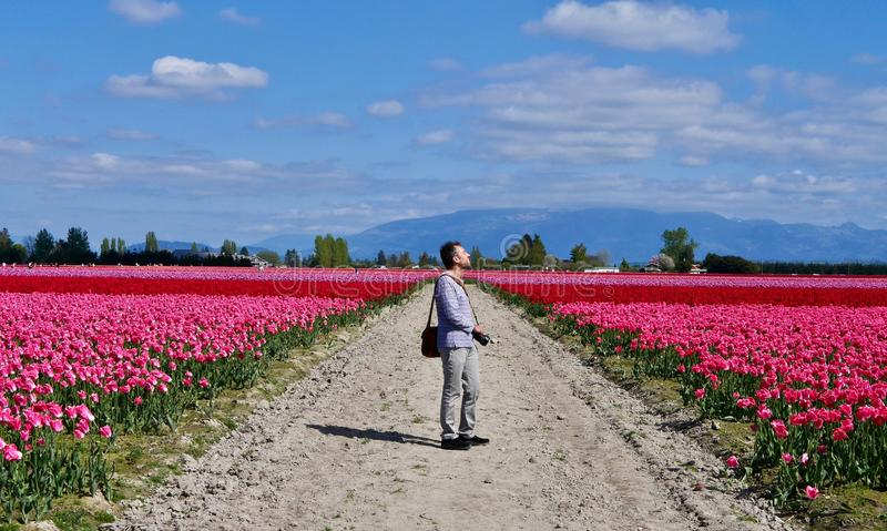 Man photographer at colourful tulip fields. royalty free stock image