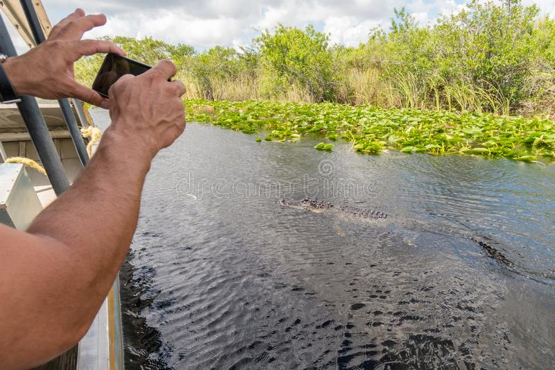 Man photographing close alligator from airboat in Everglades national park, Florida, United States of America royalty free stock image