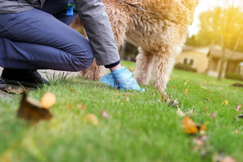 Man Picking up / cleaning up dog droppings.  stock photo