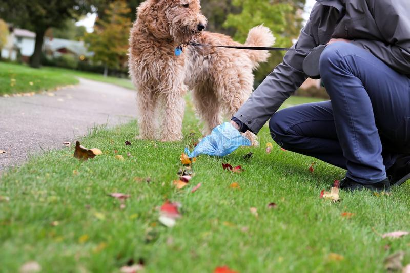 Man Picking up / cleaning up dog droppings. Man Picking up / cleaning up dog droppings stock images