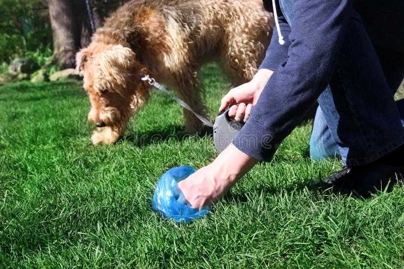 Man Picking up / cleaning up dog droppings.  royalty free stock images