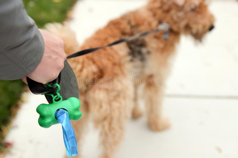 Man Picking up / cleaning up dog droppings. Man Picking up / cleaning up dog droppings royalty free stock images