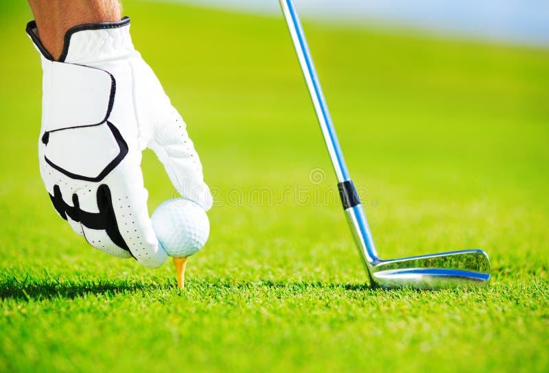 Man Placing Golf Ball on Tee stock photography