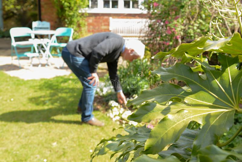 Mature man gardening at home royalty free stock photos