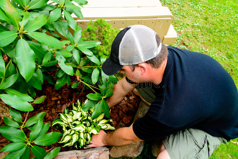 Man Planting and landscaping. A Man in a plain black shirt and hat Planting and landscaping royalty free stock photo