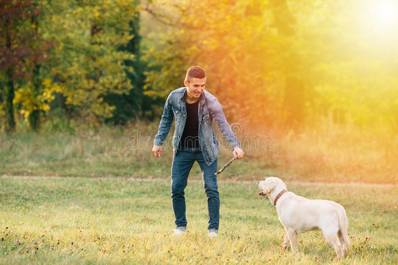 Man playing with his dog Labrador in park. At sunset royalty free stock photo