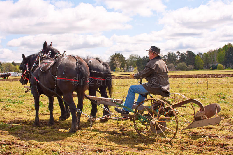 Man Plowing With Draft Horses