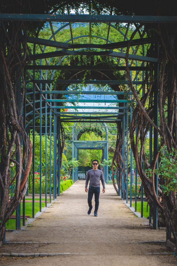 Download Man Portrait With A Maze Path In The Park Stock Photo - Image of labyrinth, foliage: 91428062