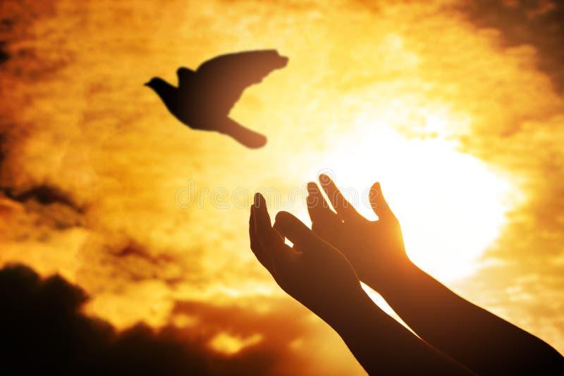 Man praying and free bird enjoying nature on sunset, Human raising hands. Worship christian religion. silhouette pigeon flying stock photography