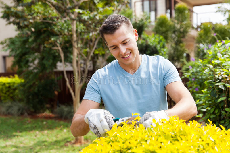 Man pruning plant. Handsome young man pruning plant at home garden stock images