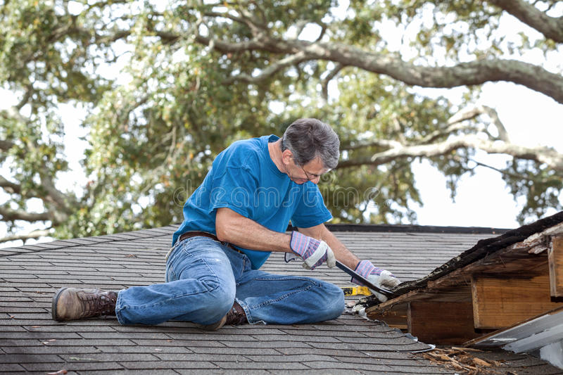 Man Prying Rotten Wood from Roof Beams and Decking. Man using crowbar to remove rotten wood from leaky roof. After removing fascia boards he has discovered that royalty free stock photo