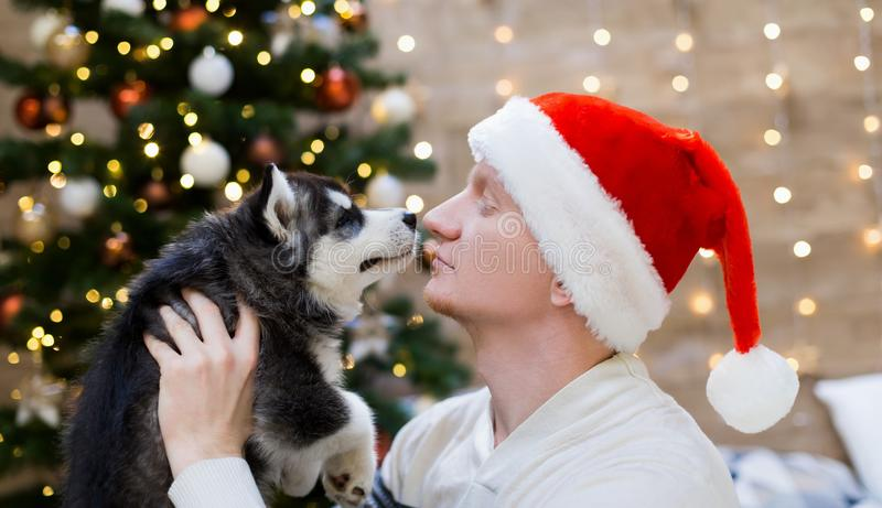 Man and puppy husky, Santa Claus hat, close up royalty free stock images