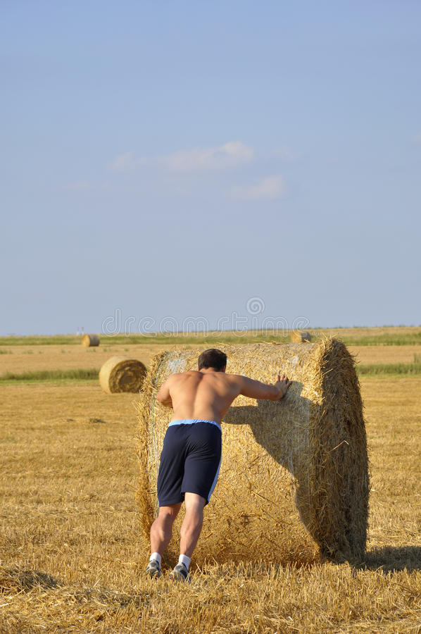 Download Man push bale of straw stock image. Image of hand, labourer - 12631169
