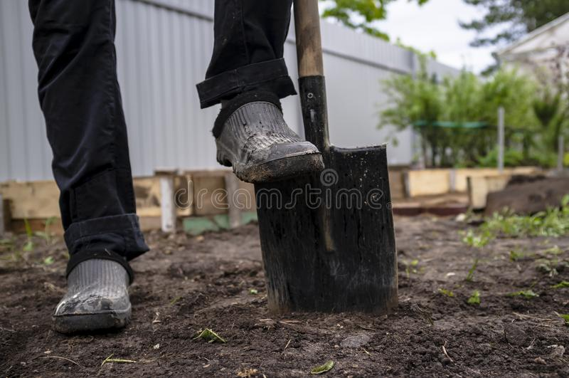 The man put one foot in rubber shoes on a steel shovel, in a gar stock images