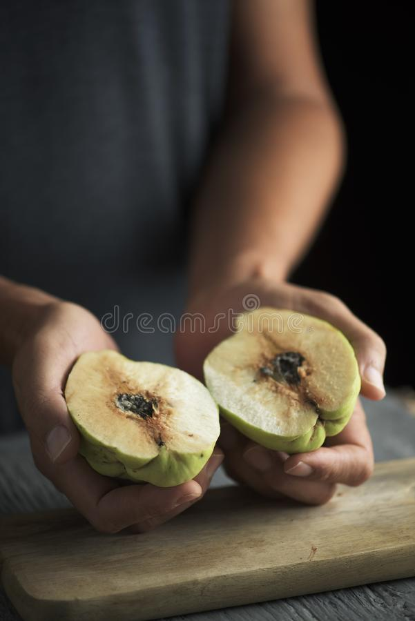 Man with a quince fruit in his hands stock photo