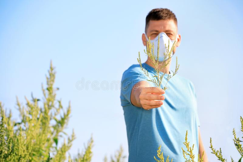 Man with ragweed branch suffering from allergy, focus on hand stock photos