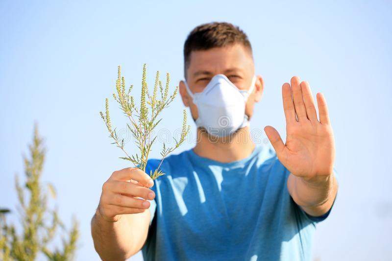 Man with ragweed branch suffering from allergy, focus on hands royalty free stock images
