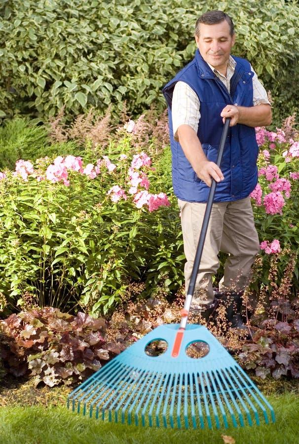 Man raking garden royalty free stock photos