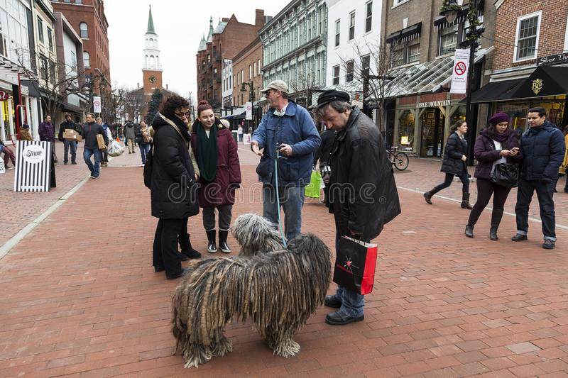 Man with rare striking puli dogs covered in dreadlocks talking to people royalty free stock images