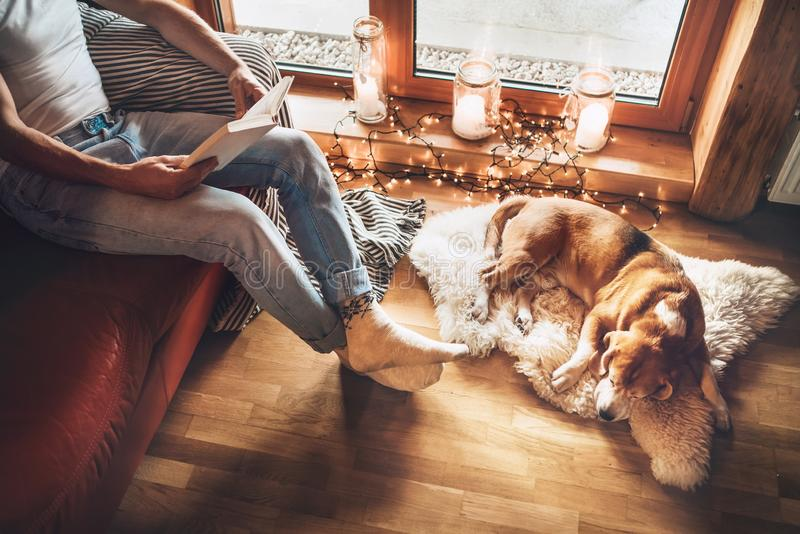 Man reading book on the cozy couch near slipping his beagle dog on sheepskin in cozy home atmosphere. Peaceful moments of cozy. Home concept image stock photos