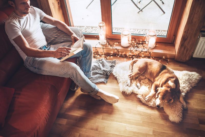 Man reads book sitting on the cozy couch and his beagle dog sleeps on sheepskin on floor stock photos