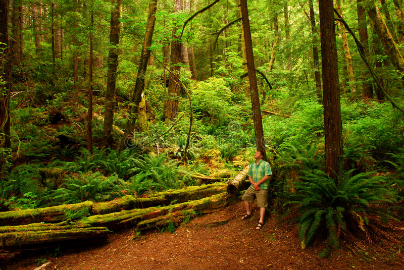 Man in Redwood Forest