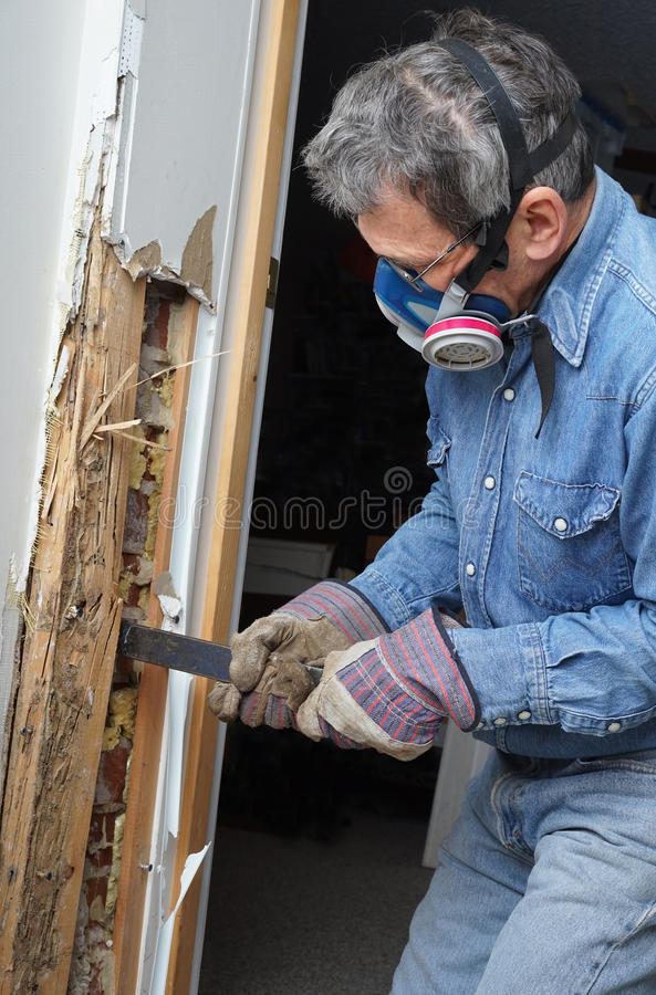 Man removing termite damaged wood from wall stock images