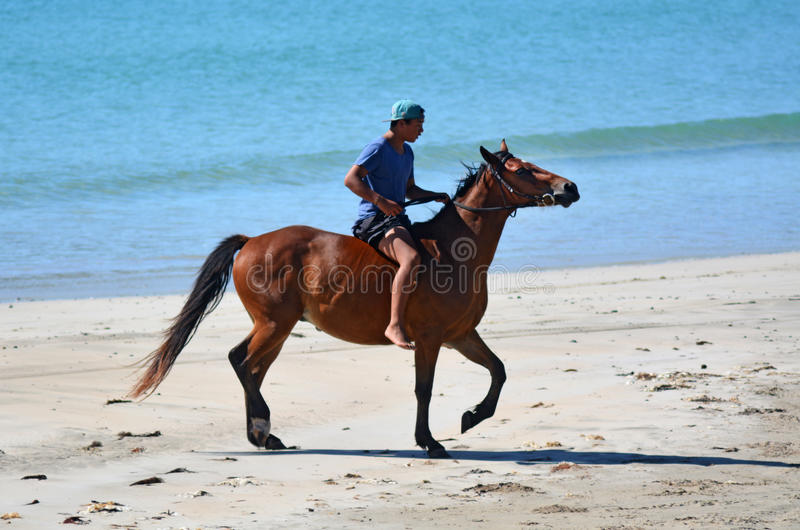 Man ride horse. MATAI BAY, NZ - JAN 29:Man ride horse in Matai bay on Jan 29 2014. It's a famous travel destination in northland New Zealand royalty free stock image