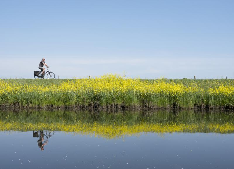 Man rides bicycle along water of valleikanaal near leusden in the netherlands and passes yellow blooming flowers of rapeseed. In spring stock photography