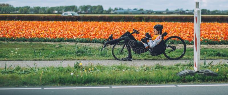 Man ridiing a recumbent bicycle, tulip background near Keukenhof. Gardens, Netherlands, leisure activity royalty free stock image