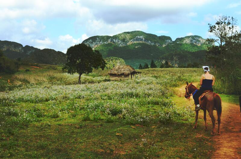 Man Riding Brown Horse Near Green Field during Daytime stock photo