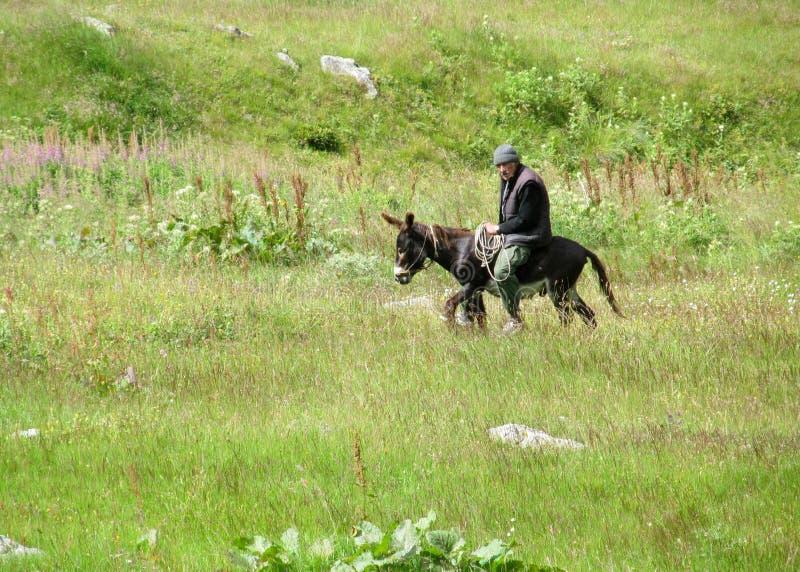 Man riding a donkey stock photography