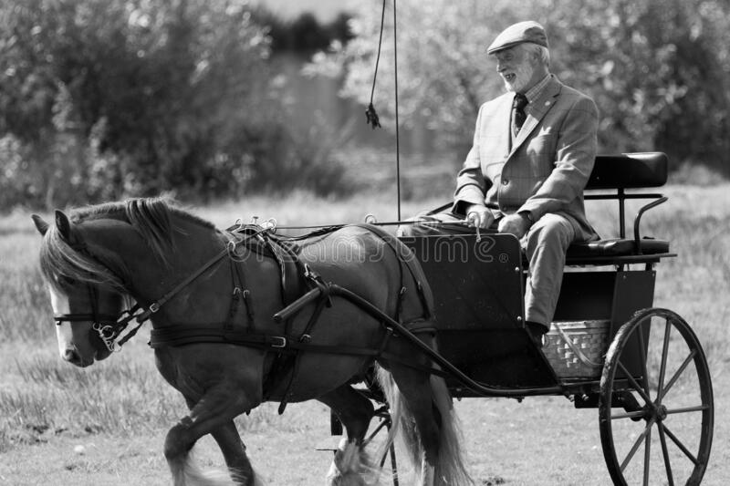 Man Riding Horse and Trap at a Rural Show royalty-vrije stock fotografie