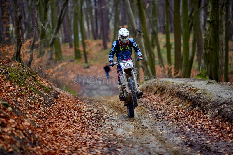 Man riding a motorcycle fast in autumn forest. Blurred background is in motion.  royalty free stock images