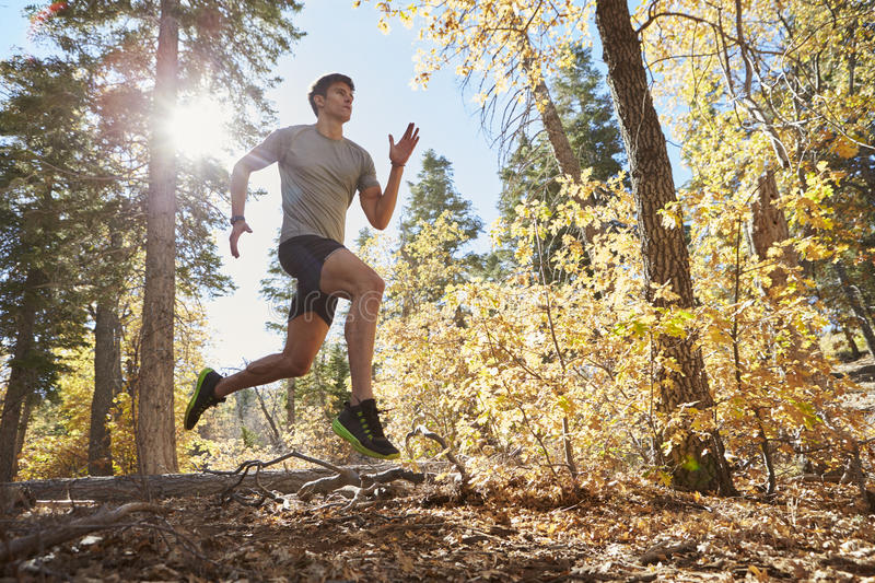Man running in a forest jumps over branches, low angle view stock photography